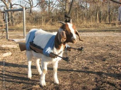 cabra Legión